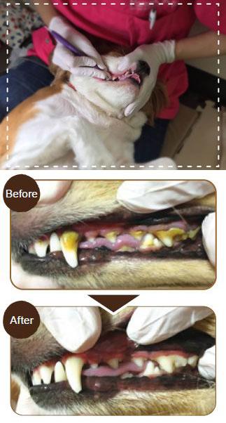 歯石ケアの流れ