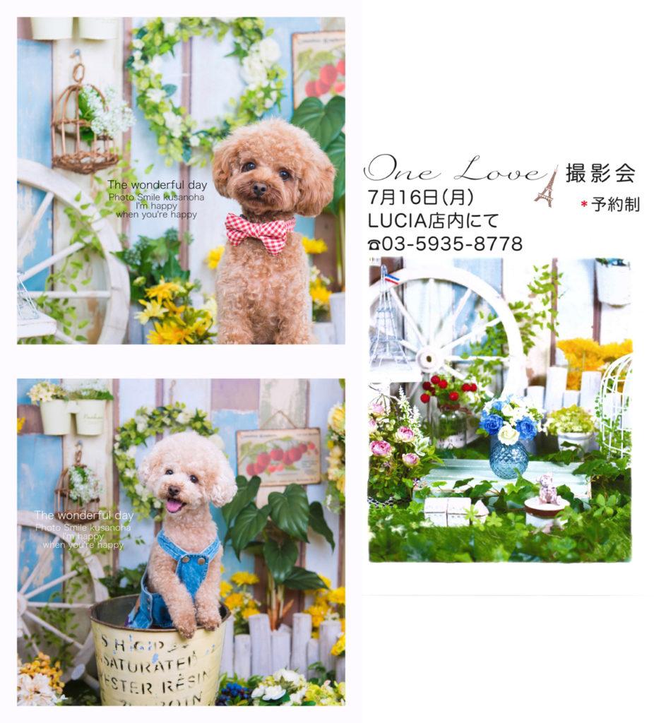 犬の撮影会 one love 020180716 eyecatch